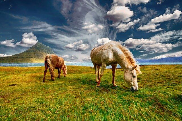 10 Characteristics Of Horses - Facts About Horses