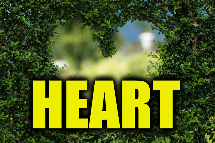 """Use Heart in a Sentence - How to use """"Heart"""" in a sentence"""
