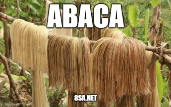 "Use Abaca in a Sentence - How to use ""Abaca"" in a sentence"