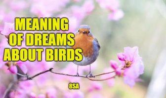 Dreams About Birds