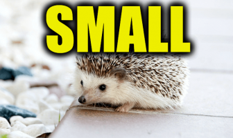 "Use Small in a Sentence - How to use ""Small"" in a sentence"