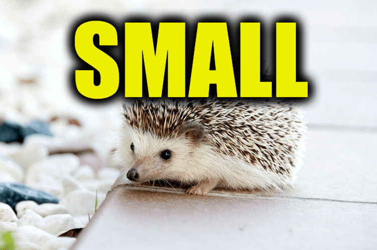"""Use Small in a Sentence - How to use """"Small"""" in a sentence"""