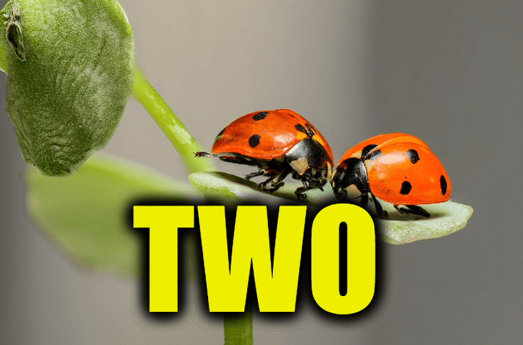 """Use Two in a Sentence - How to use """"Two"""" in a sentence"""