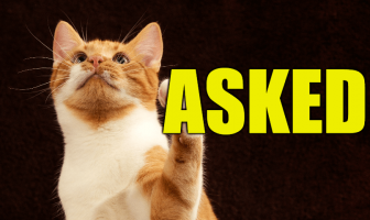 """Use Asked in a Sentence - How to use """"Asked"""" in a sentence"""