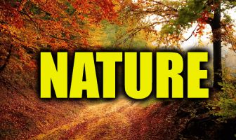 "Use Nature in a Sentence - How to use ""Nature"" in a sentence"