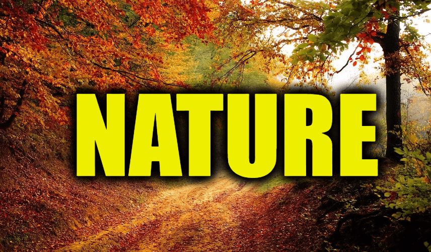 """Use Nature in a Sentence - How to use """"Nature"""" in a sentence"""
