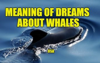 Meaning of Dreams About Whales