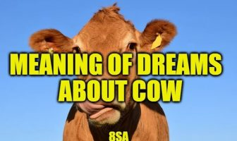 Dreams About Cows