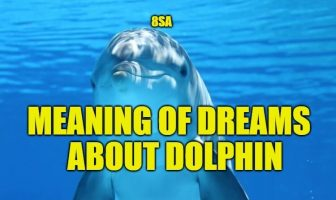 Meaning of Dreams About Dolphins