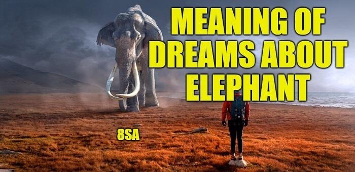 Dreams About Elephants