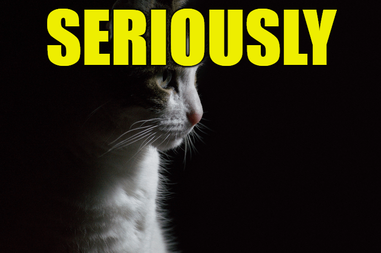 """Use Seriously in a Sentence - How to use """"Seriously"""" in a sentence"""
