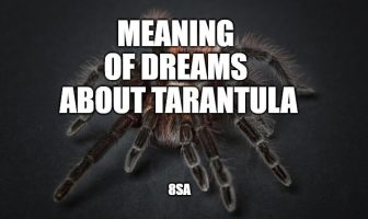 tarantula dream
