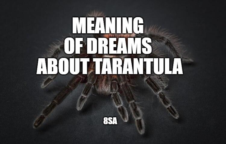 tarantula dream