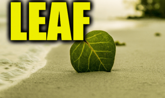 "Use Leaf in a Sentence - How to use ""Leaf"" in a sentence"