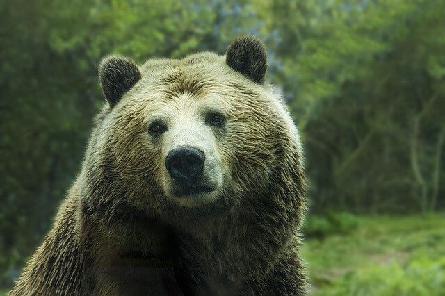 Idioms With Bear and Meanings