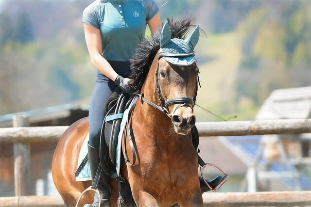 """Use Horseback in a Sentence - How to use """"Horseback"""" in a sentence"""