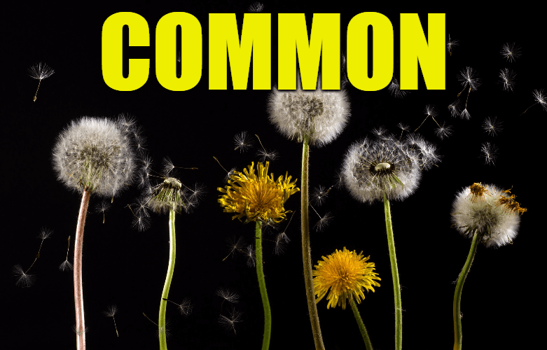 """Use Common in a Sentence - How to use """"Common"""" in a sentence"""