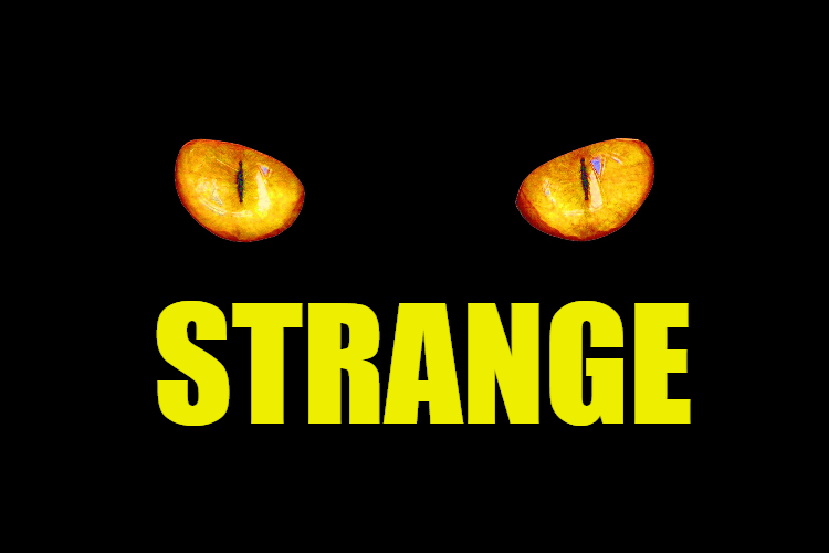 """Use Strange in a Sentence - How to use """"Strange"""" in a sentence"""