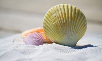 "Use Shell in a Sentence - How to use ""Shell"" in a sentence"