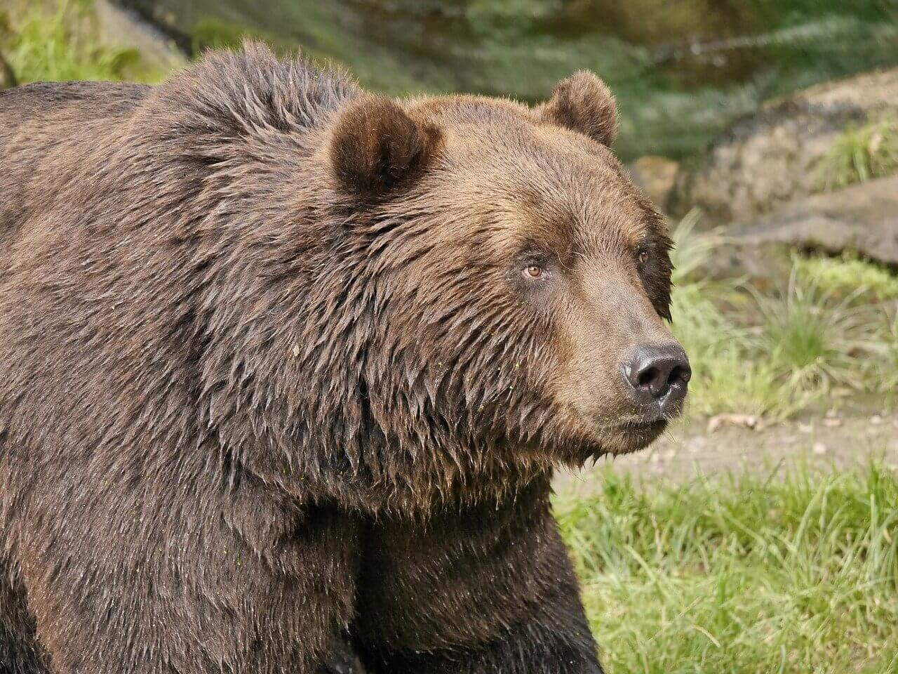 """Use Bear in a Sentence - How to use """"Bear"""" in a sentence"""