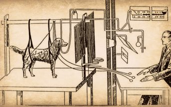 Ivan Pavlov's Dog Experiment - What is Conditioned Reflex?