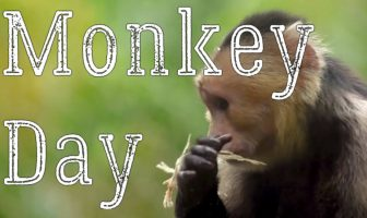 What is Monkey Day (December 14) and Activities