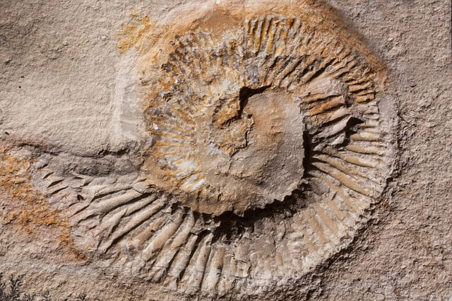 Devonian Period Facts - What happened during the devonian period?