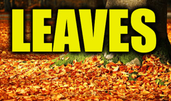 "Use Leaves in a Sentence - How to use ""Leaves"" in a sentence"