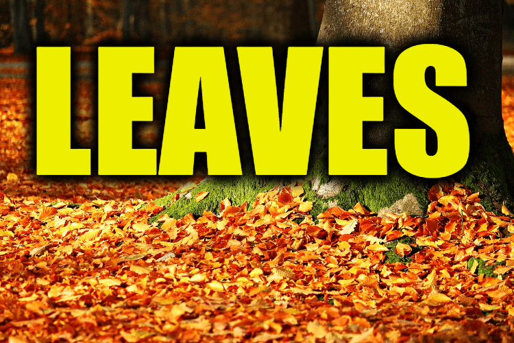 """Use Leaves in a Sentence - How to use """"Leaves"""" in a sentence"""
