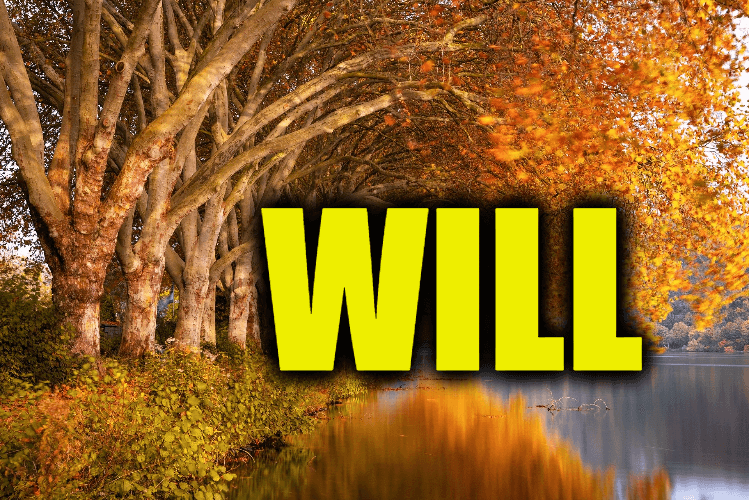 """Use Will in a Sentence - How to use """"Will"""" in a sentence"""