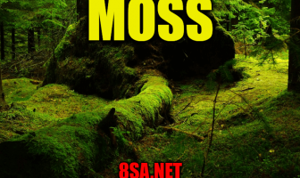 Moss - Sentence for Moss - Use Moss in a Sentence