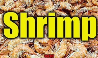 Shrimp - Sentence for Shrimp - Use Shrimp in a Sentence