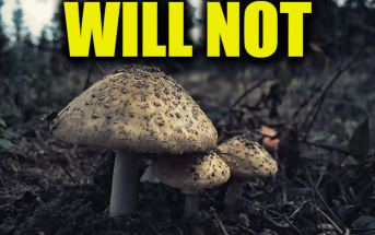 """Use Will not in a Sentence - How to use """"Will not"""" in a sentence"""