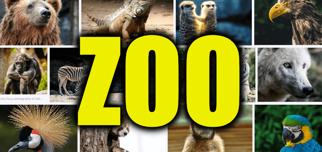 "Use Zoo in a Sentence - How to use ""Zoo"" in a sentence"