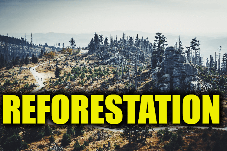 "Use Reforestation in a Sentence - How to use ""Reforestation"" in a sentence"