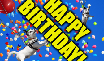 Funny Birthday Wishes and Messages - Birthdays are a special moment