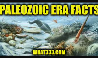 Paleozoic Era Facts