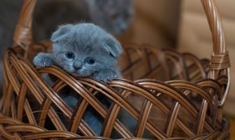 What is National Kitten Day (July 10) and Activities