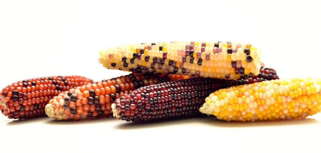 What is National Corn on the Cob Day (June 11) & Activities