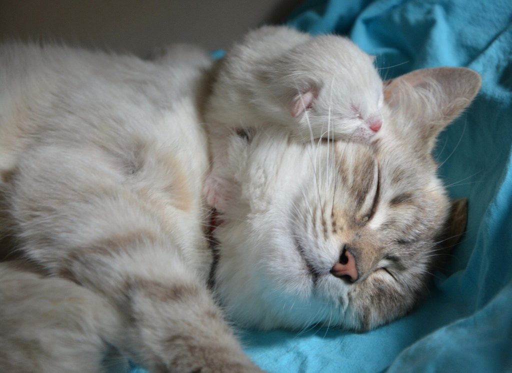 Hug Your Cat Day Messages, Wishes, Greetings – 4 June