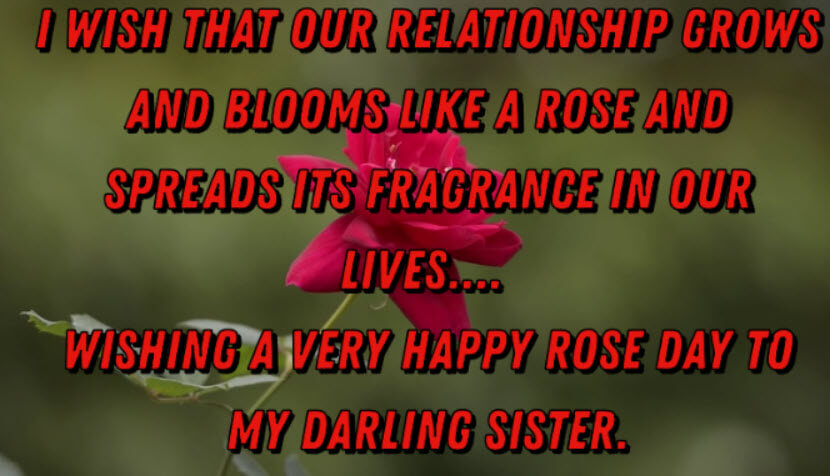 Rose Day Wishes Messages for Sister