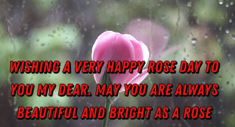 Happy Rose Day Messages : Rose Day Quotes, Wishes