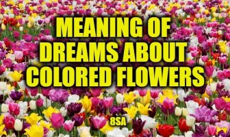 dreams colored flowers