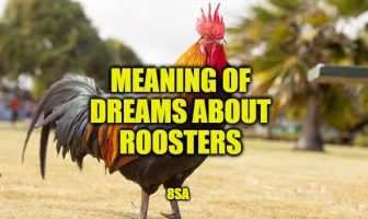 Dreams About Roosters