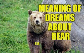 Dreams About Bear