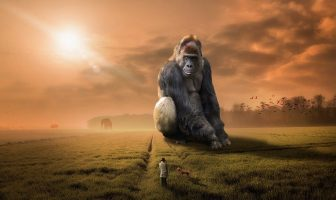 Do Animals Dream? Is This A Real Imagination?