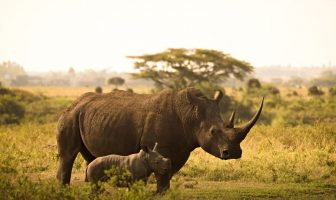 Save the Rhino Day Slogans and Sayings