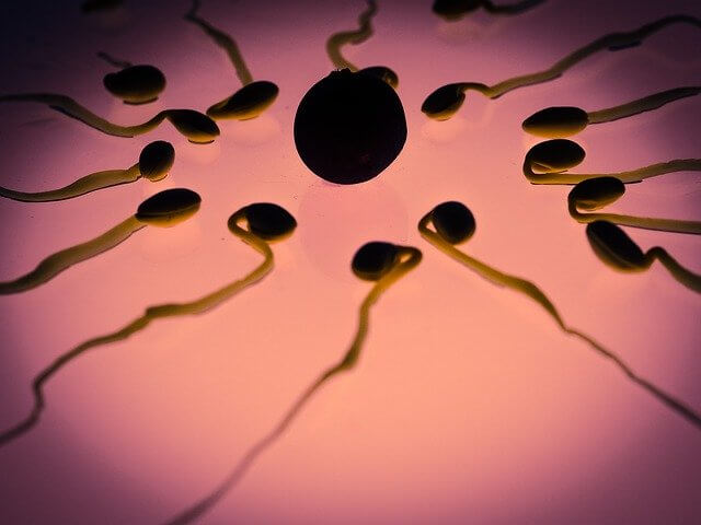 Does Stress Affect Sperm Quality? How to Have Healthy Sperm?