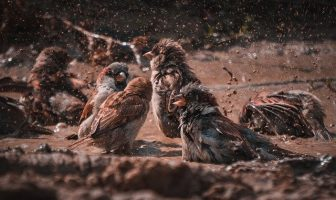 International Mud Day Messages and Quotes – 29 June